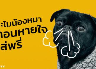 หมาถอนหายใจ หมายถึงอะไร หมาเบื่อเราหรือเปล่า พฤติกรรมการถอนหายใจของน้องหมา ไม่ได้ใช้แสดงออกในแง่ลบเหมือนกับคน แล้วมันคืออะไร NIFTY มีคำตอบ